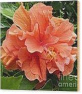Double Peach Hibiscus Wood Print