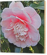 Double Pink Camilla Flower Wood Print