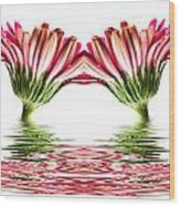 Double Pink Gerbera Flood Wood Print