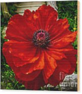 Double Poppy Wood Print