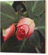 Double Rose Impatiens Wood Print