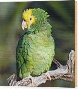 Double Yellow Headed Parrot Wood Print