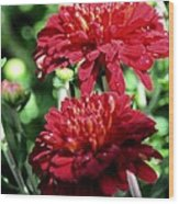 Doubled Red Mums Wood Print