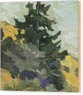Douglas Fir In Washington Wood Print