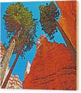 Douglas Firs On Wall Street On Navajo Trail In Bryce Canyon National Park-utah Wood Print