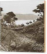 Douglas School For Girls At Lone Cypress Tree Pebble Beach 1932 Wood Print