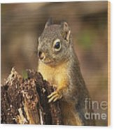 Douglas Squirrel On Stump Wood Print