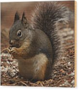 Douglas's Squirrel Wood Print
