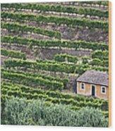 Douro Valley Vineyards Wood Print