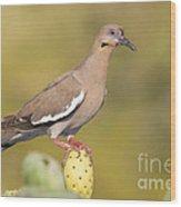 Dove On A Cactus Bud Wood Print