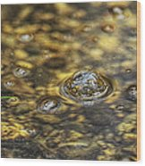 Down By The Bubbling Spring Wood Print