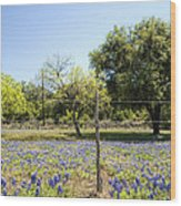 Down Country Bluebonnets Wood Print