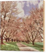 Down The Cherry Lined Lane Wood Print