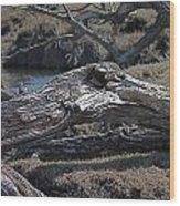 Down Tree Along Creek Wood Print