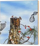 Downy And Titmouse Playing On Lichen Stump Wood Print