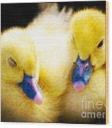 Downy Ducklings Wood Print