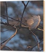 Downy Feather Backlit On Wintry Branch At Twilight Wood Print