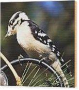 Downy Woodpecker 2 Wood Print