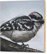 Downy Woodpecker 3 Wood Print