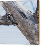 Downy Woodpecker Home Wood Print