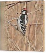 Downy Woodpecker In Brush Wood Print