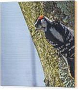 Downy Woodpecker - Male Wood Print