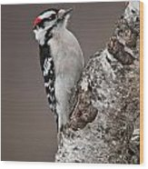 Downy Woodpecker Pictures 11 Wood Print