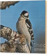 Downy Woodpecker Pictures 23 Wood Print