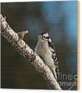 Downy Woodpecker Pictures 25 Wood Print