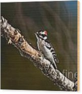 Downy Woodpecker Pictures 36 Wood Print