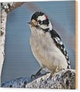 Downy Woodpecker Pictures 39 Wood Print