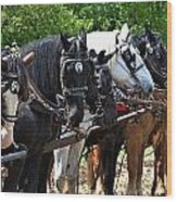 Draft Horses All In A Row Wood Print