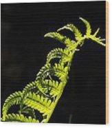 Dragon Fern Wood Print