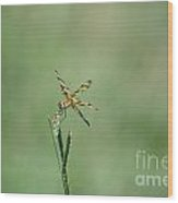 Dragon Fly 3 Wood Print