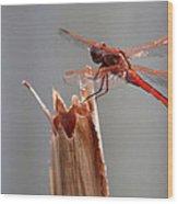 Dragon Fly- Br Wood Print