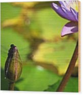 Dragon Fly On Bud And Water Lily Horizontal Number One Wood Print