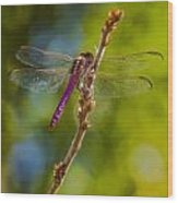 Dragon Fly Or Not Wood Print