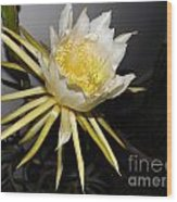 Dragon Fruit Blossom II Wood Print