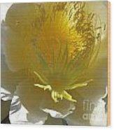 Dragon Fruit Blossom Iv Wood Print