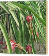 Dragon Fruit Tree Wood Print