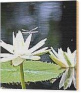 Dragon Lily 3  Wood Print