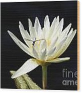 Dragon Lily  Wood Print