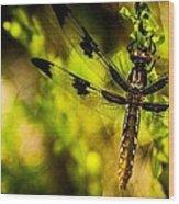Dragonfly - Dragon Waiting Wood Print
