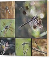 Dragonflies On Twigs Collage Wood Print