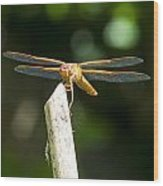 Dragonfly 2 Wood Print by Scott Gould