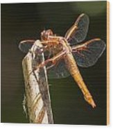 Dragonfly 3 Wood Print by Scott Gould