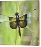 Dragonfly 9249 Wood Print