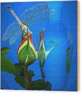Dragonfly And Bud On Blue Wood Print