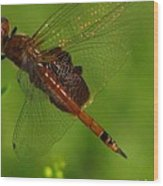 Dragonfly Art 2 Wood Print