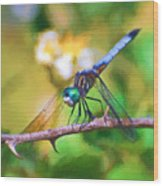 Dragonfly Art - A Thorny Situation Wood Print